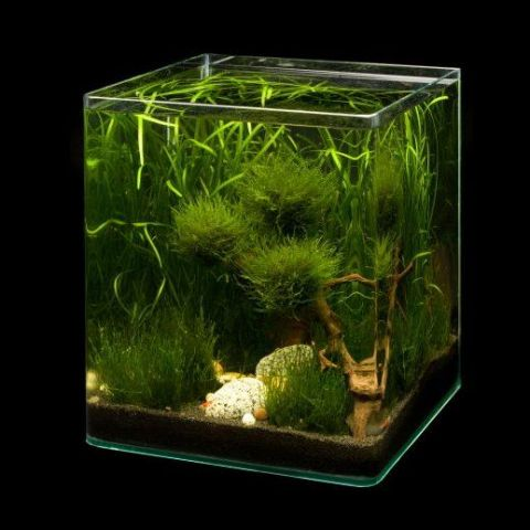 dennerle nano cube 30l krueger aquaristik der onlineshop f r aquascaping und nanoaquaristik. Black Bedroom Furniture Sets. Home Design Ideas