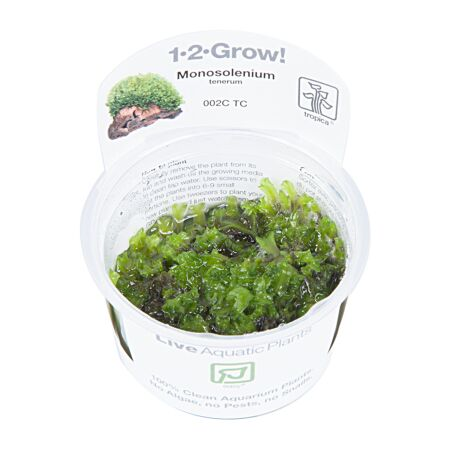 Monosolenium tenerum 1-2-Grow!